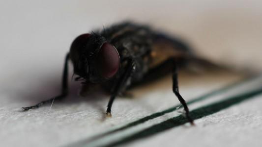 Macro Fotografie einer Fliege